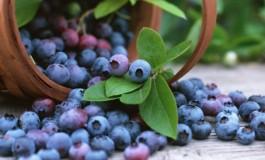 Grumbullimi i frutave malore në Dragash (Video)
