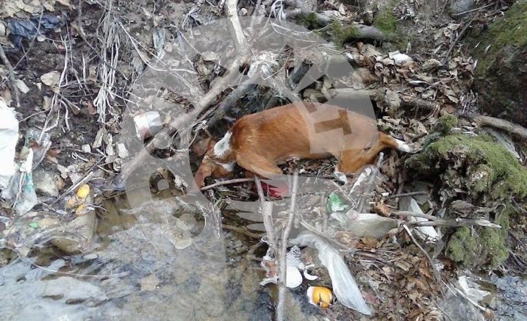 Skandal me mbeturinat në fshatin Zaplluxhe