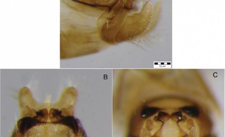 Gjendet një lloj i ri insekti nga Parku Kombëtar Mali Sharr