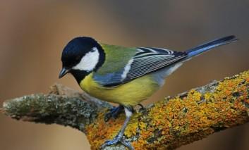 Malet e Sharrit po mbeten pa zogj