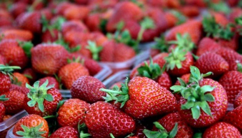 Bujqësia nxitës kryesor i rritjes ekonomike dhe i krijimit të vendeve të punës