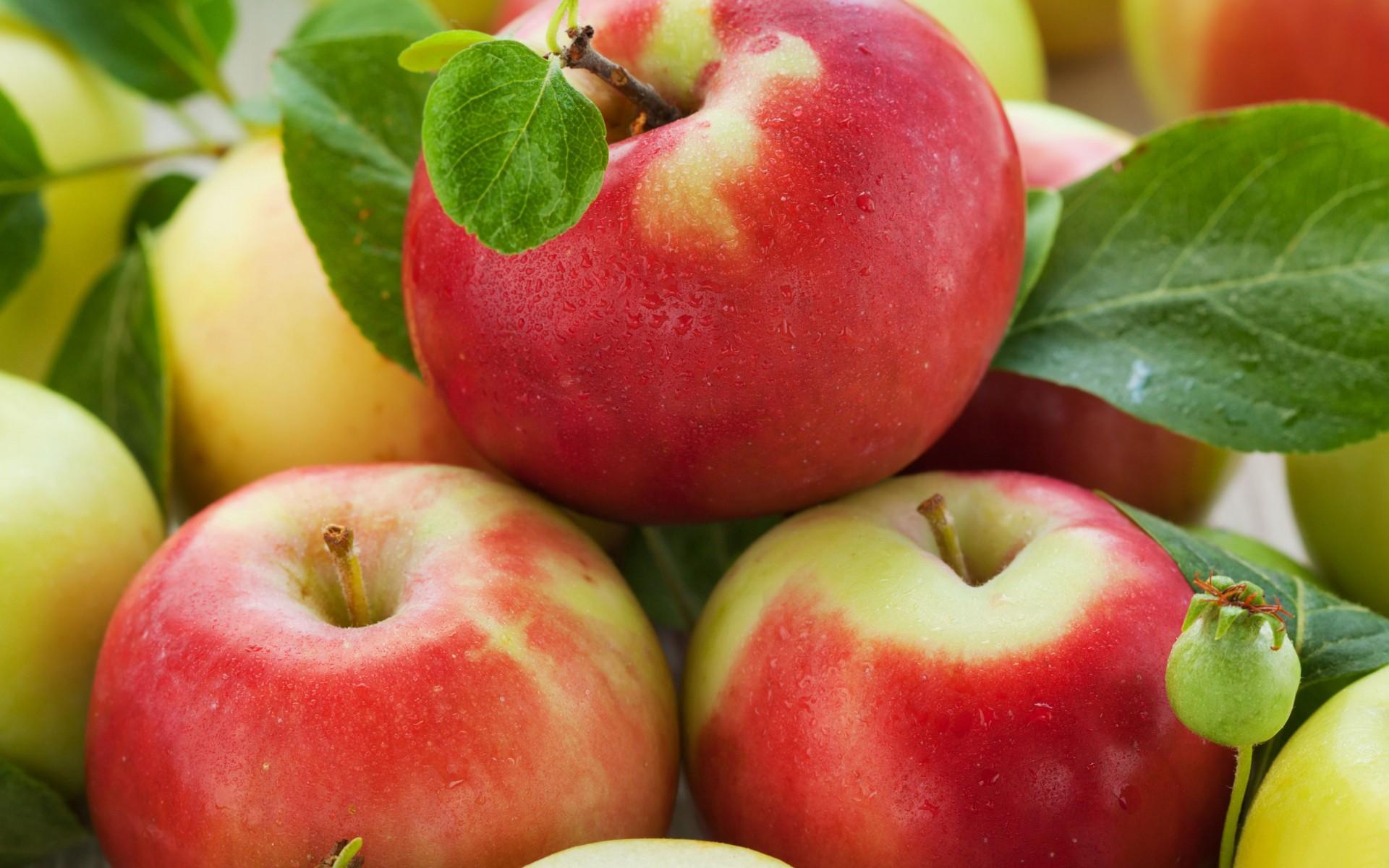 Përpunimi shtëpiak i mollës