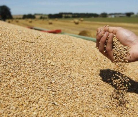 Nga korrje-shirjet, Kosova siguron rreth 60 për qind të nevojave për bukë