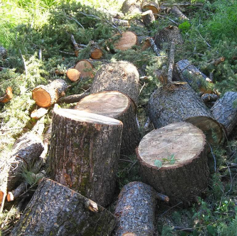 Prerjet ilegale të pyjeve, Dragashi më e mira në mbrojtën e tyre