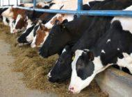 Lopët po ngordhin në Dragash