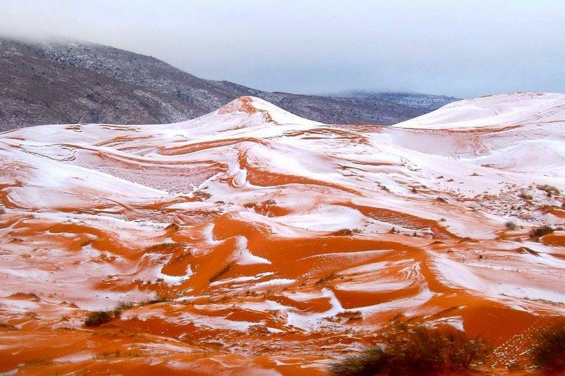 Pas 37 vitesh bie borë në Saharë (Foto)