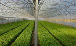 Rriten çmimet e produkteve bujqësore