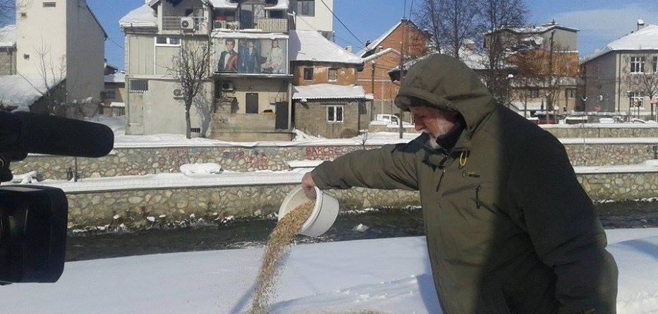 Edhe Zogjtë të rrezikuar nga bora dhe acari