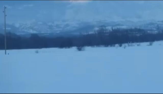 Ujku në rrugën e fshatit Kuk të Opojës (Video)
