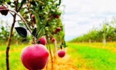 Tregtia mbetet sektori më i preferuar për kosovarët