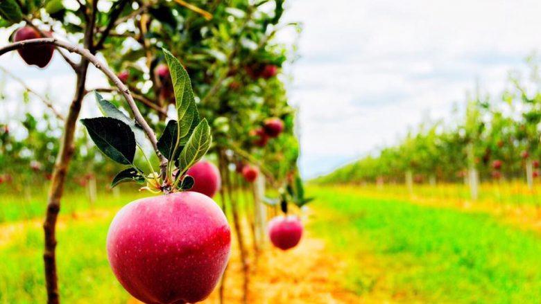 Ministria e Bujqësisë hap aplikimin për grante në bujqësi