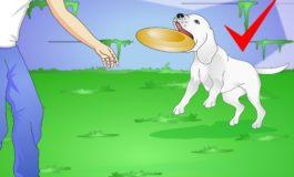 Si të veproni nëse sulmoheni nga qeni