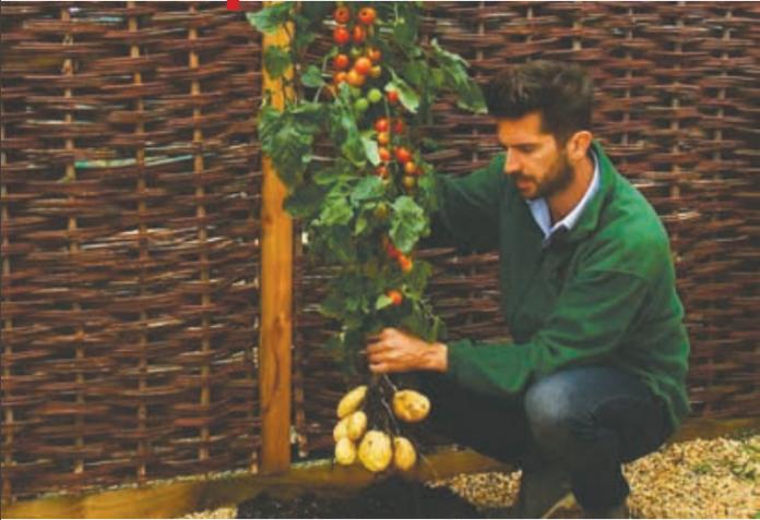 Sipër domate, poshtë patate