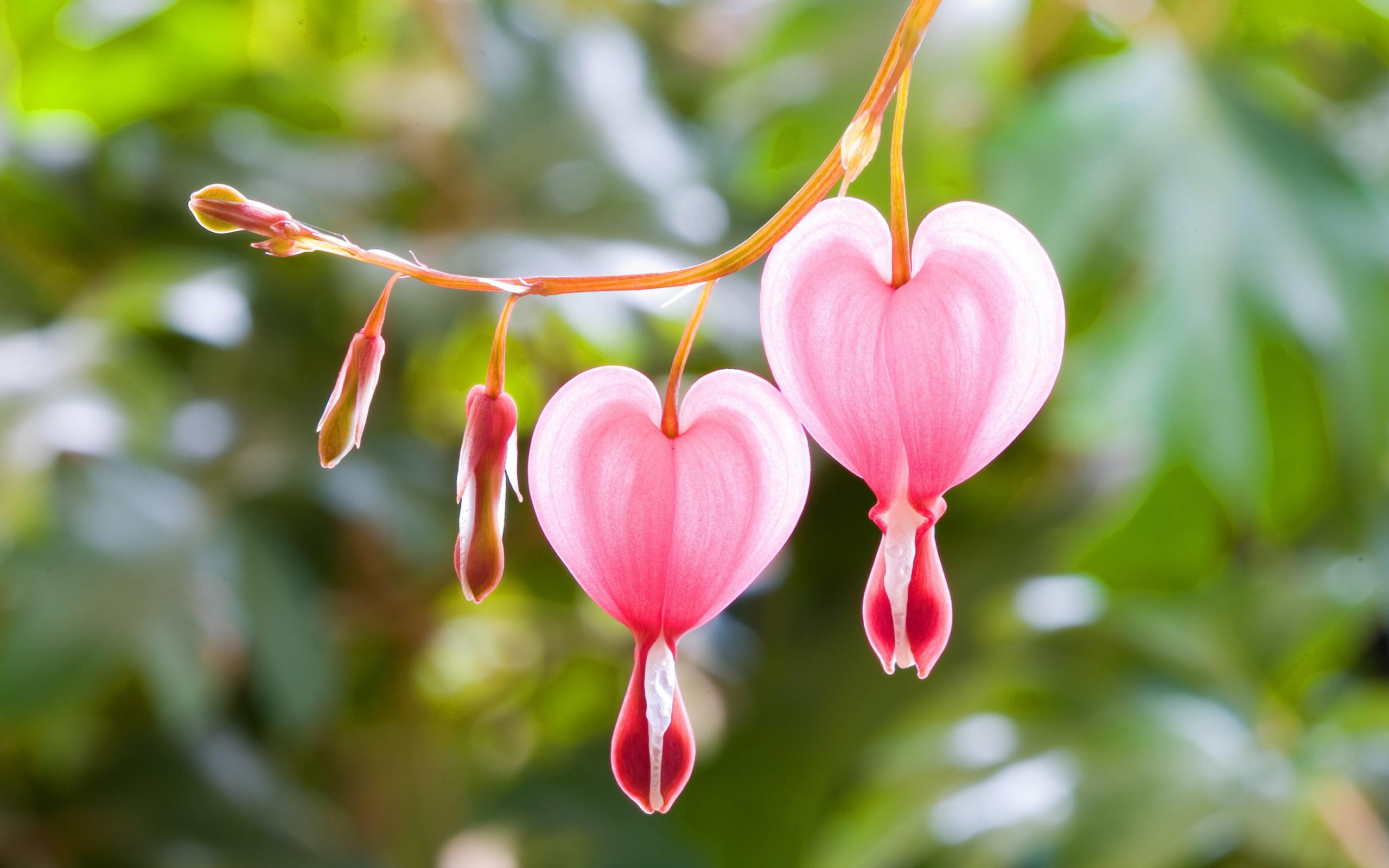 Të fitosh zemra