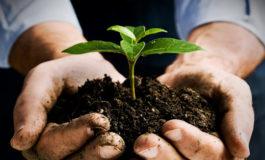 Mbjellja e fidanëve frutorë