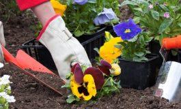 Tetë hapa për mbjelljen e suksesshme të luleve