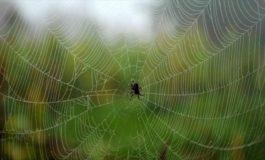 Zvicër, aksident nga frika e merimangës
