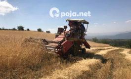 Filloi korrjeshirja në fshatin Pllajnik të Dragashit