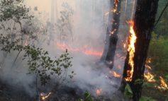 Beteja me zjarret në Shqipëri, 8 vatra në 24 orët e fundit