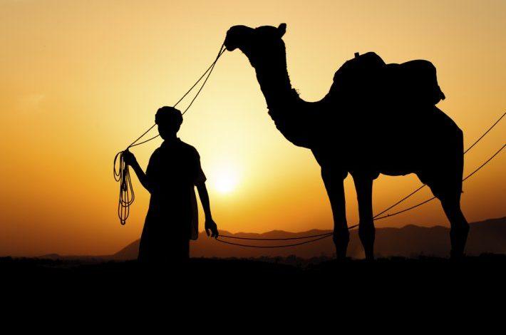 Mrekullia e Allahut në krijimin e devesë