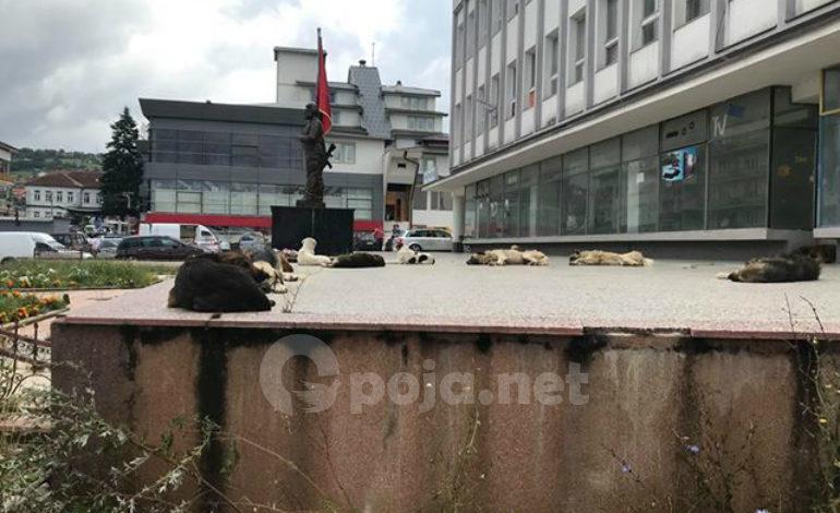 Me qentë endacak është mbushur qyteza e Dragashit (Foto)