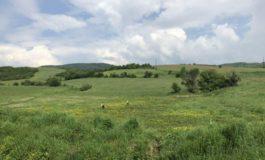 Malet e Sharrit brenda vitit i vizitojnë apo në të jetojnë mbi 200 lloj zogjsh