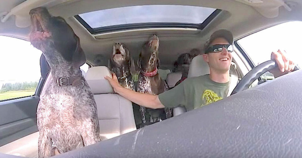 Dad put camera in car to show his 4 dogs flipping out when they hear they're going to the park