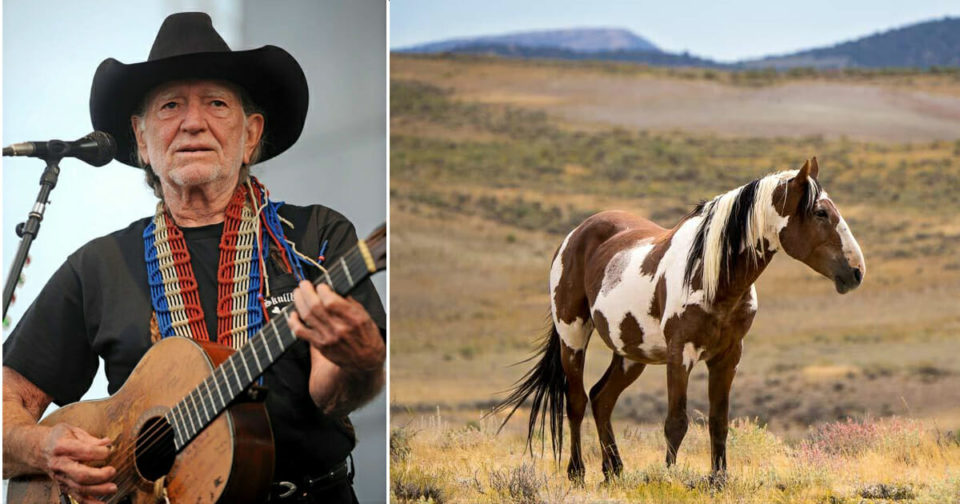 86-year-old Willie Nelson saves 70 horses from the slaughterhouse to roam free on his ranch in Texas