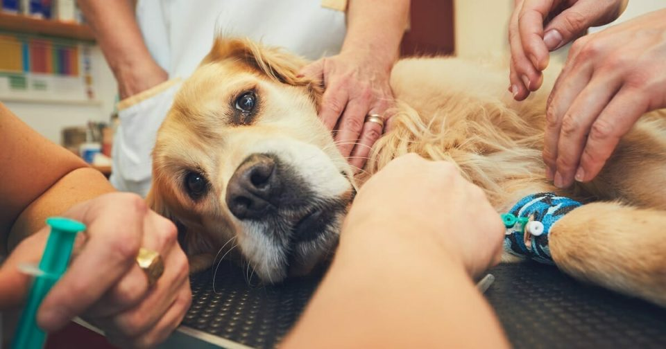 Vet sounds alarm: Dying animals are afraid and alone – and it's the owners' fault