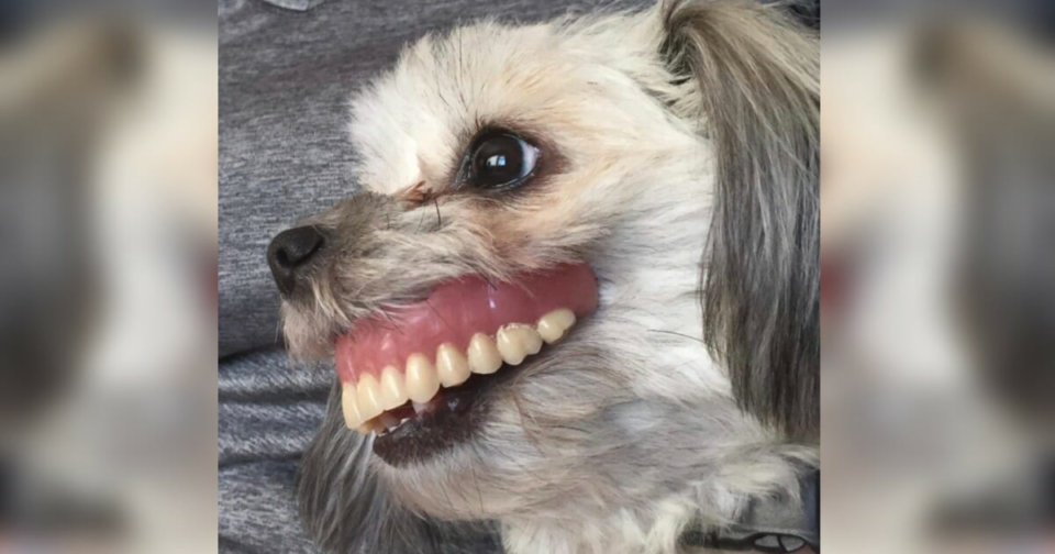 Man loses dentures, looks under table and sees dog with a brand new smile