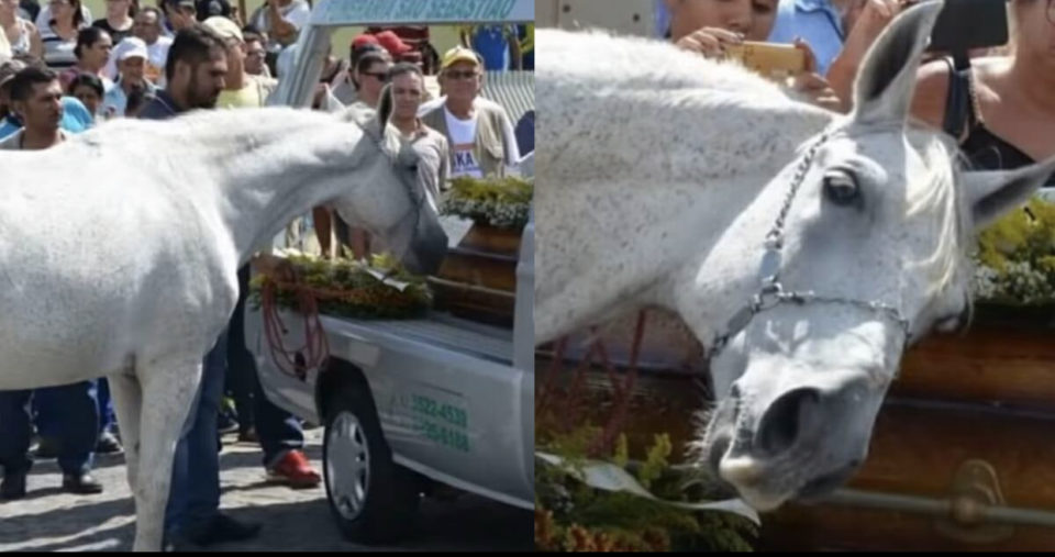 Hearts break as grieving horse smells late owner's casket and emotionally breaks down