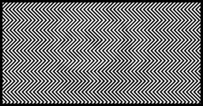 Only 1% of people can find the animal in this picture, studies says. Can you?