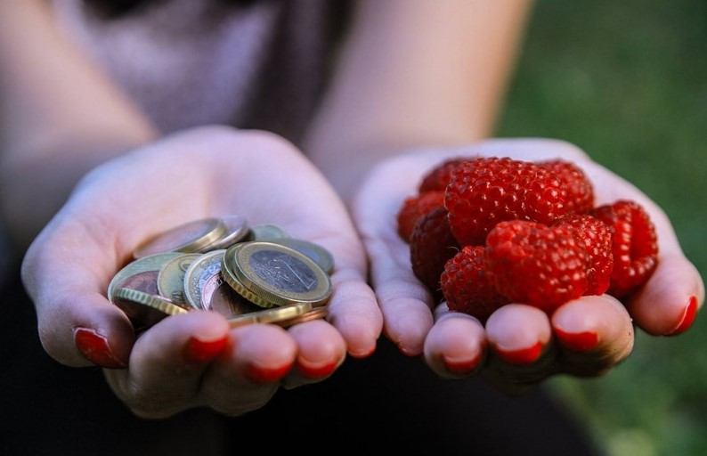 Mbi 4.7 milionë euro të paguara për bujqit