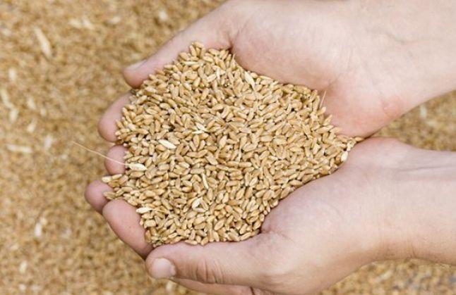 Stavileci: Ka import të vazhdueshëm të grurit, nuk ka nevojë për panik