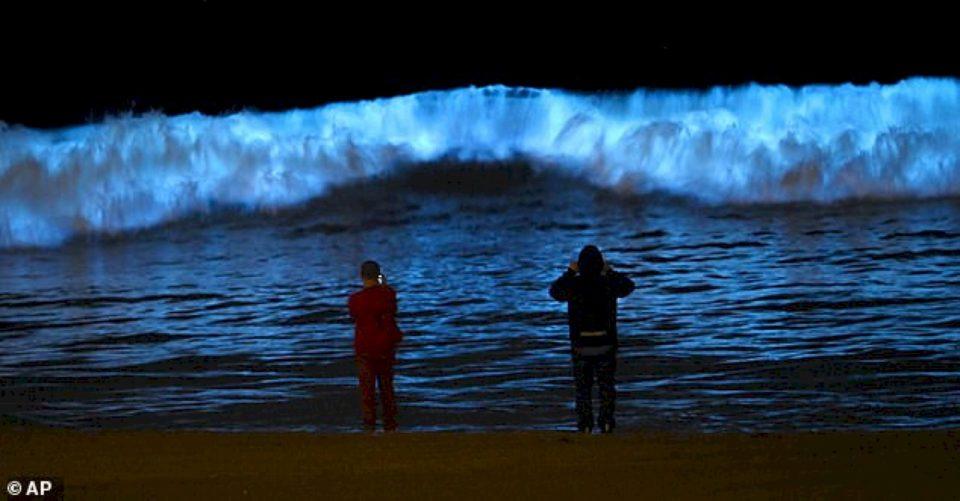 Valët mahnitëse biolumineshente në brigjet e Kalifornisë janë shndërruar në një valë të kuqe që kanë erë squfuri