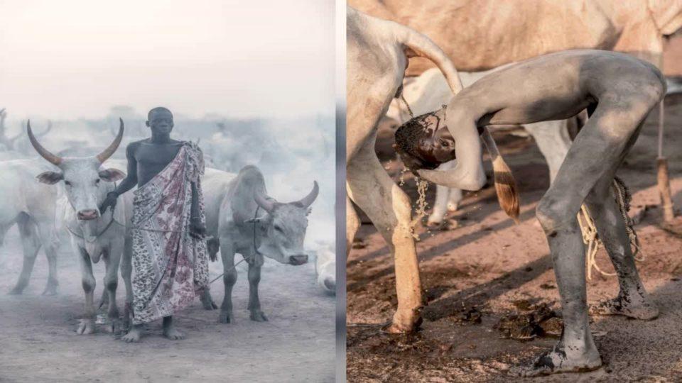 Fisit afrikan që adhuron bagëtinë dhe përdor urinën e lopës për të larë fytyrat dhe zbardh flokët