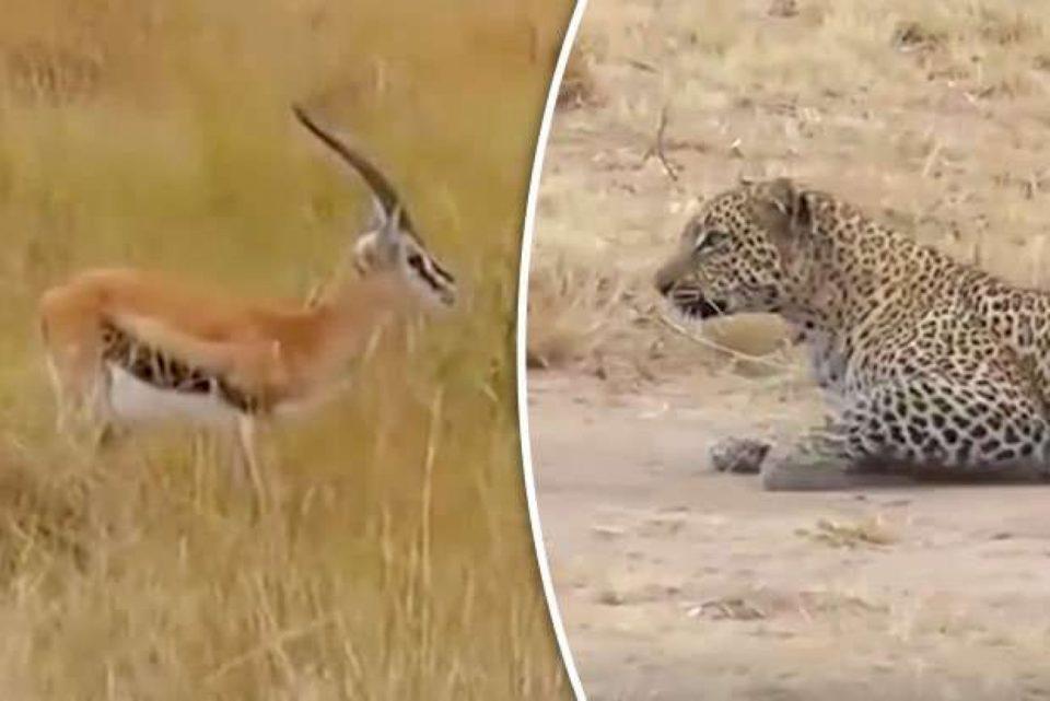 Nuk është me rëndësi a je luan apo gazelë, e rëndësishme është që të vraposh