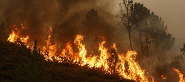 Përfshihen nga zjarri 30 hektarë me pisha e shkurre në një fshat në Dragash