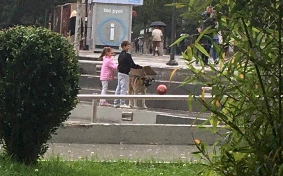 Prishtinë, fëmijët e mbrojnë qenin nga shiu – e lagen vet (FOTO)