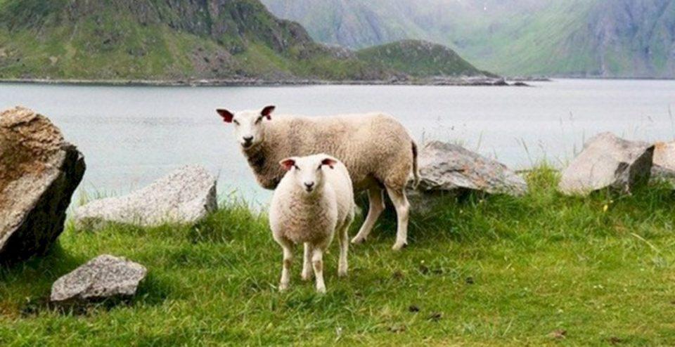 A mund ti dhurohet dikujt dele për Kurban?