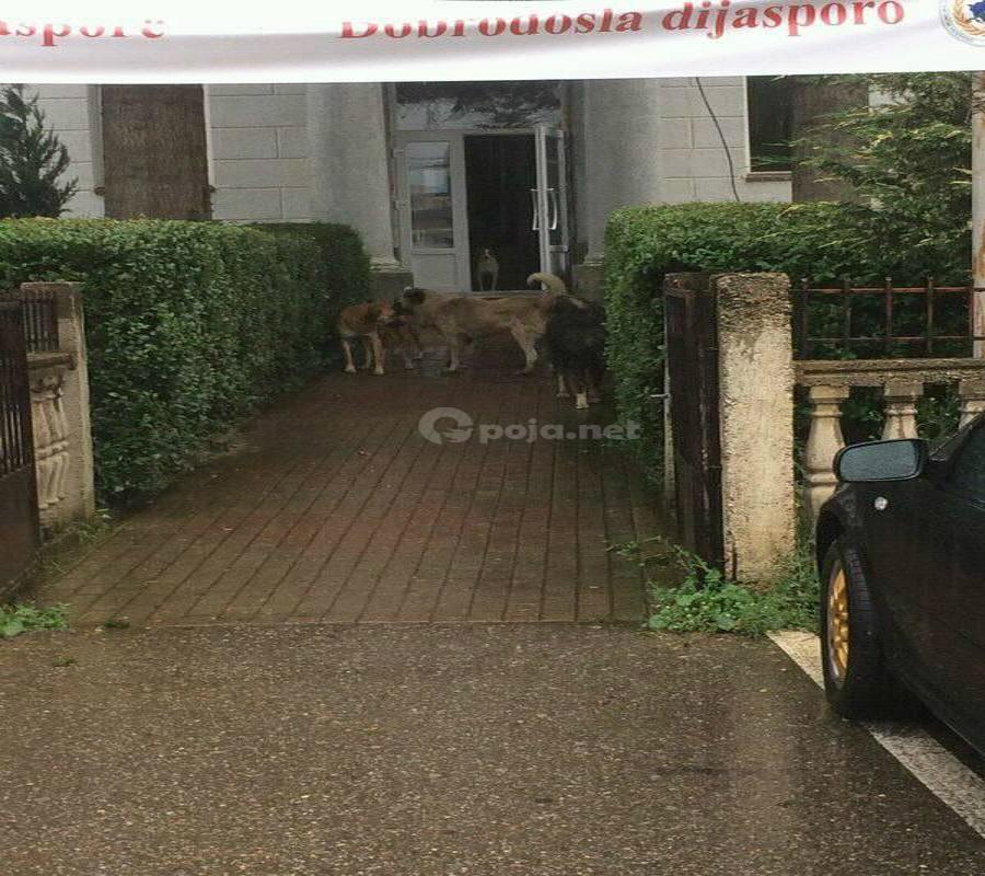 Komuna e Dragashit për një muaj do të merret edhe me qentë endacakë