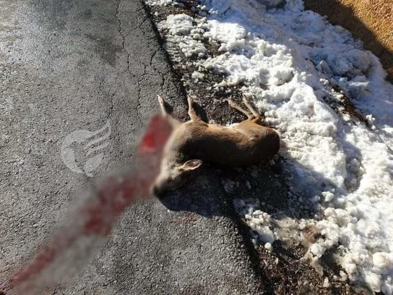 Skandaloze: Në Dragash e vrasin me armë zjarri drenushën skaj rrugës